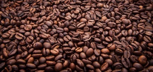Dampfdorado Conqueror/Kaffee